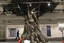ガジュマルの木 写真6