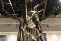 ガジュマルの木 写真5