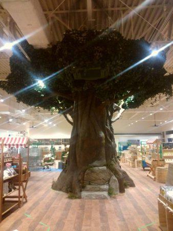 ガジュマルの木 写真