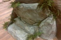 ガジュマルの木 写真3